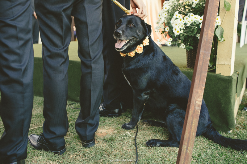 black lab at wedding ceremony